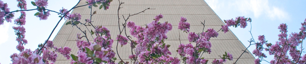 blossoms against a concrete tower